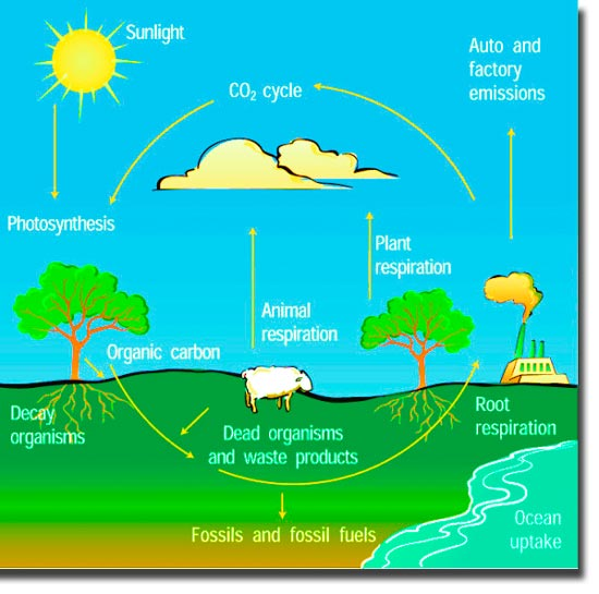Ielts graph writing the diagram below illustrates the carbon cycle carbon cycle in nature ccuart